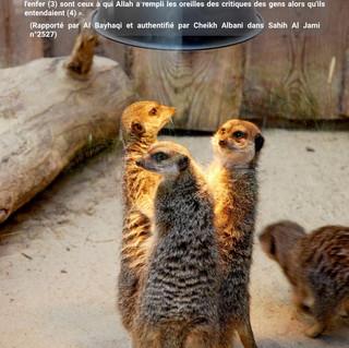 meerkats-2529496_1920-2.jpg