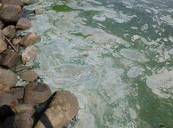 blue green algae.jpg