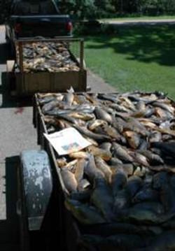 Carps in trucks