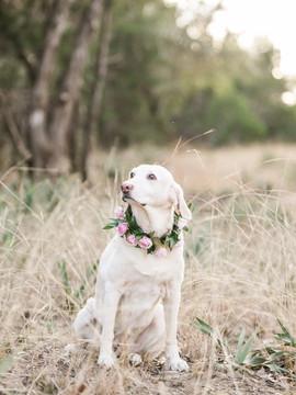 courtneydogs-15.jpg