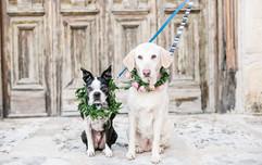 courtneydogs-46.jpg