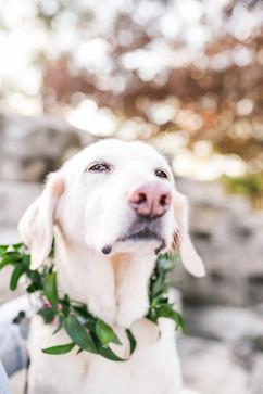 courtneydogs-26.jpg