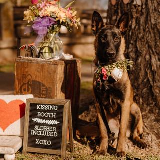 Deana Houston Valentine's Day Pups