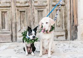 courtneydogs-45.jpg
