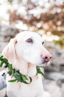 courtneydogs-28.jpg