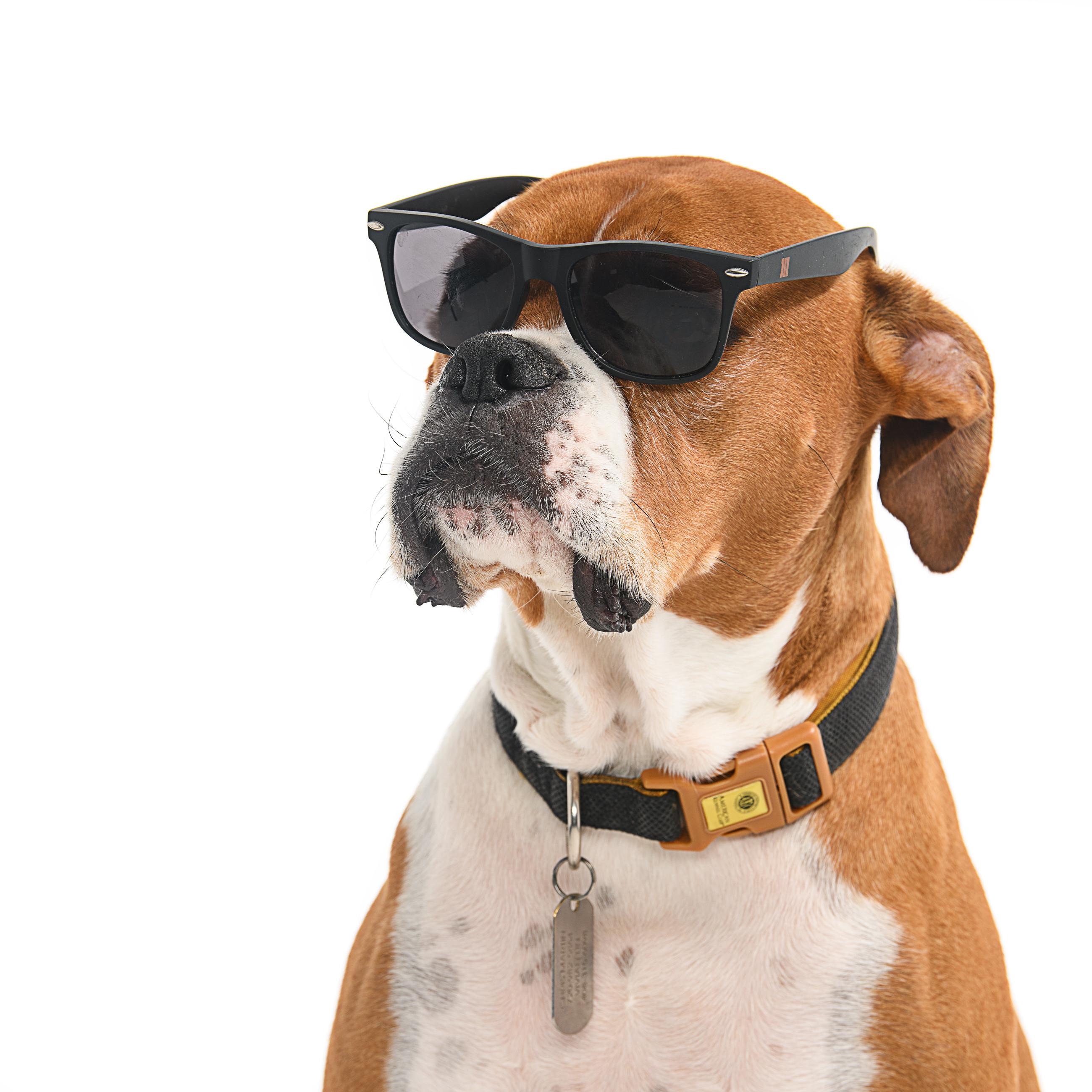 Doggo Portraits