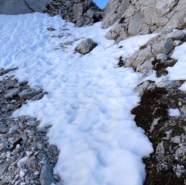 Poledeneli sneg