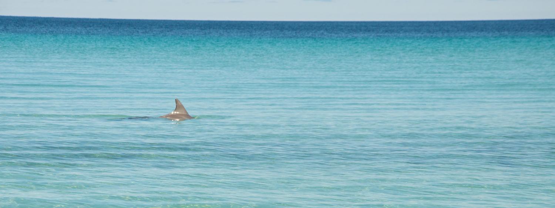 emu bay beach house dolphins
