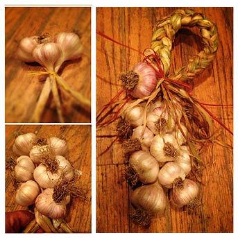 how to Festivals Garlic Braid Braiding Braids Hardneck Softneck Bulbs  Crafts Art Home Deco