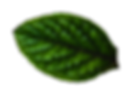 nuances-bio-vegetal-feuille3.png