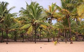 800px-Shoreline_at_Marari_beach.JPG