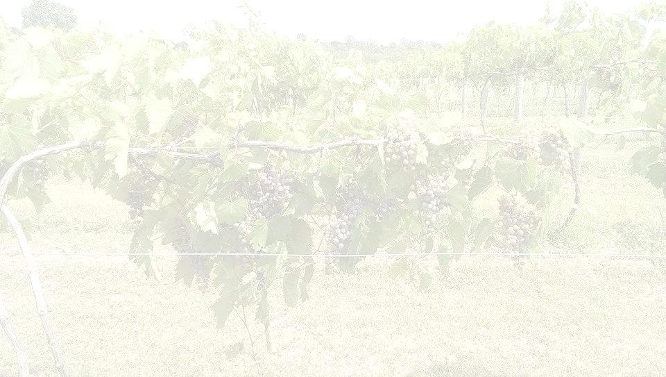vines_edited_edited.jpg