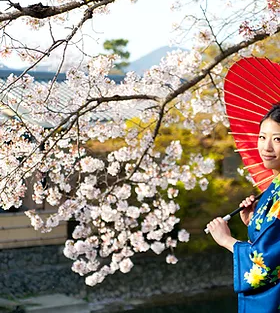 Japanese Woman in Cherry Blossom.webp