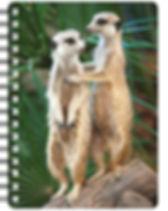 meerkats-2-nb222.jpg