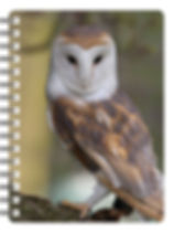 29577-sfa-3d-book-nb048-1.jpg