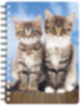nb072-kittens-2.jpg