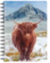 nb117-highland-cow-buachaille.jpg