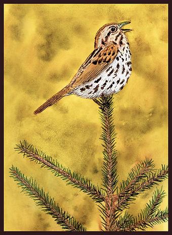 Song Sparrow MASTER BORDER LQ.jpg