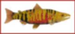 Dog Salmon 2020 w DORDER1.jpg
