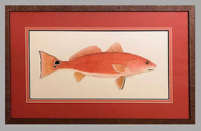 Framed Redfish 1.jpg