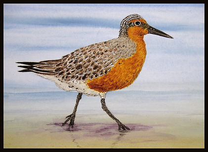 MASTER RED KNOT w BORDER.jpg