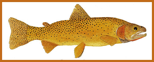 Dustys Yellowstone Cutthroat Trout - Sep