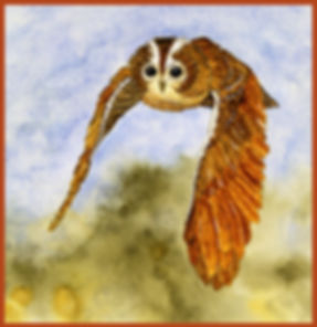 Tawny Owl in Flight w border.jpg