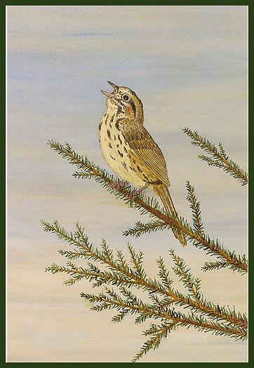 MASTER Aria - Song Sparrow  w Border.jpg