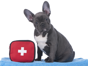 First Aid Training Extensions / Program Exceptions