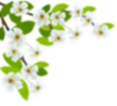 Flores-Flor-Bonita-Branca-2-PNG.png