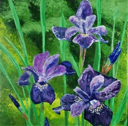 Print - Siberian Iris