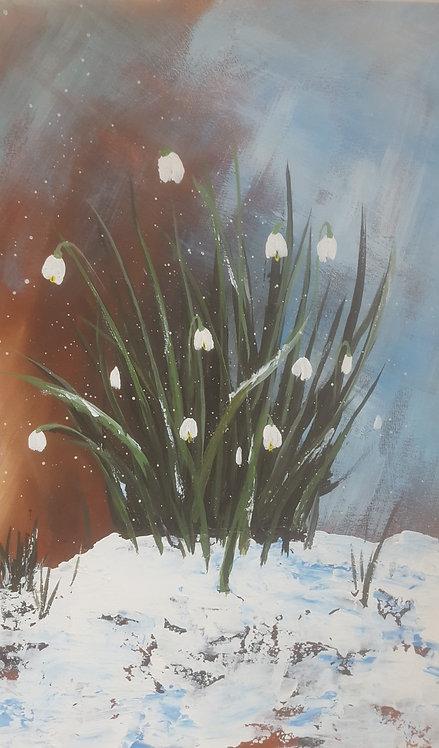 Snow Drops - Winter's Break