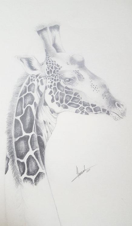 Giraffe - Elegance