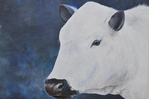 British Cow