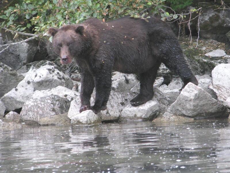 3e Blackie, bear #2