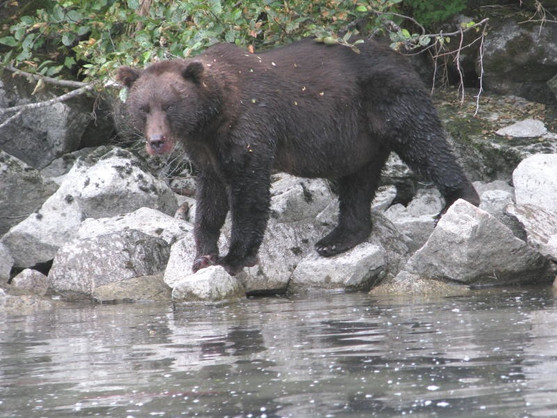3e Blackie, bear #2.jpg