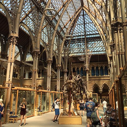 Oxford Natural History Museum.jpg