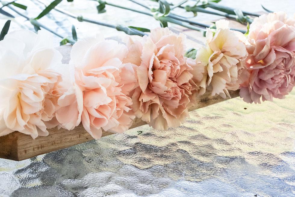 Kukkakauppa Neilikka neilikoita