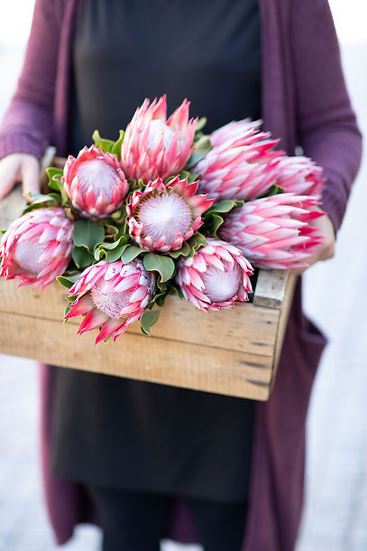 Kukkakauppa Neilikka kukkia