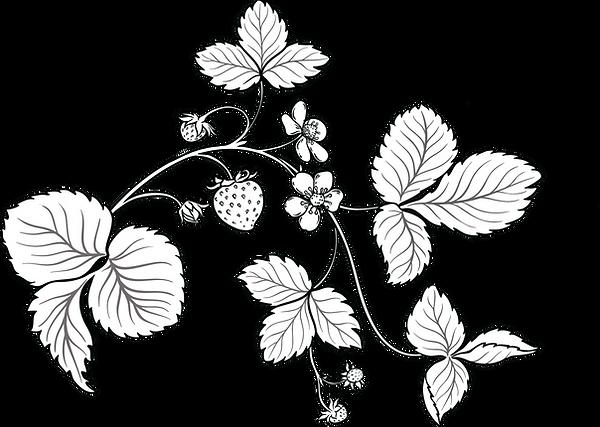 Portaanperä mansikkapiirros