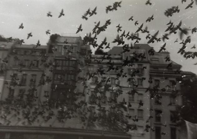 gelatin silver print from 35 mm film