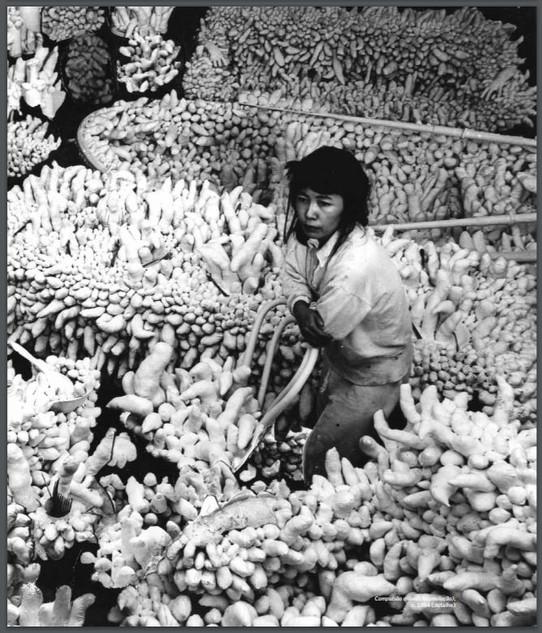 """Yayoi Kusama in """"Accumulation"""" 1964"""