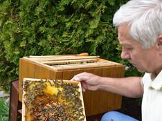 Úroda medu je najslabšia za ostatných 30 rokov!