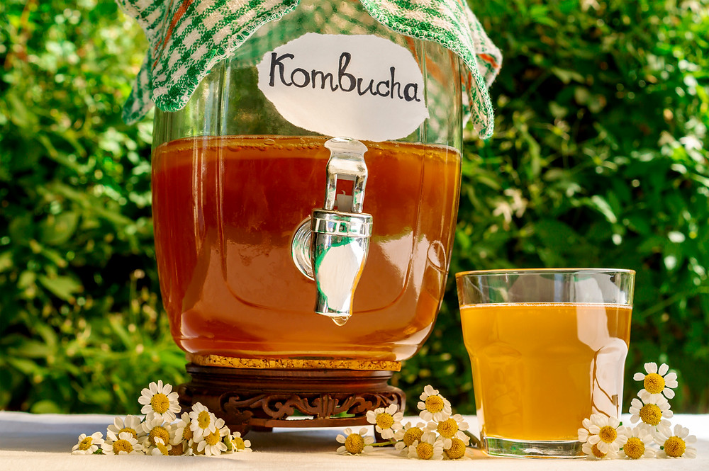 kombucha, probiotic, probiotic drink, gut health