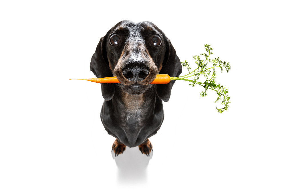 raw diet for dogs, what foods can my dog eat, nutrition for dogs