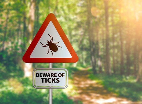 How to Reduce You and Your Family's Risk of Lyme Disease