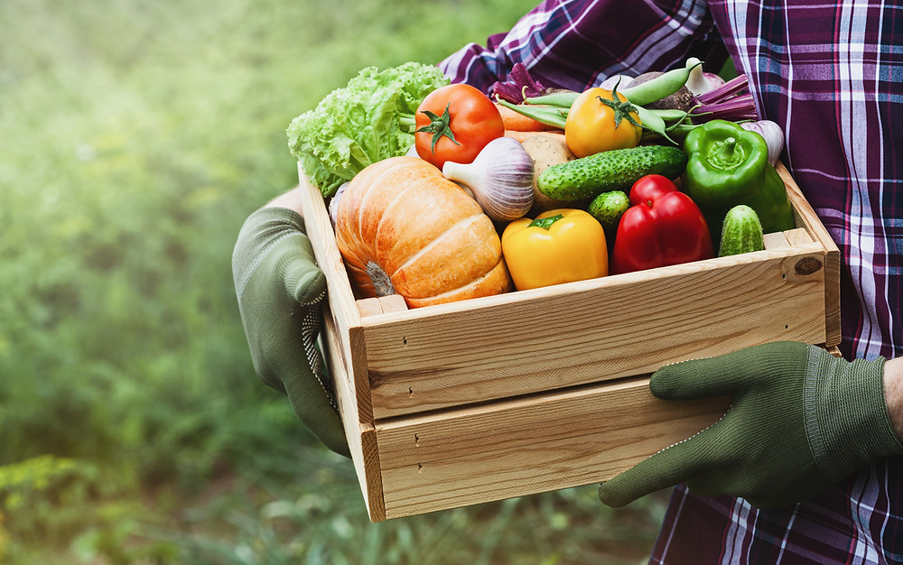 Two hands holding a box of fresh vegetables with a grass background.