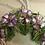 Thumbnail: Decorazione Ferro di cavallo e fiori viola lavorata a mano