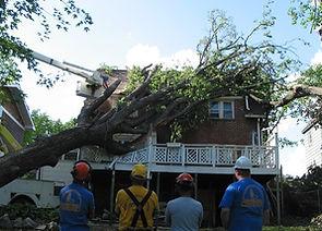 tree-on-house.jpg