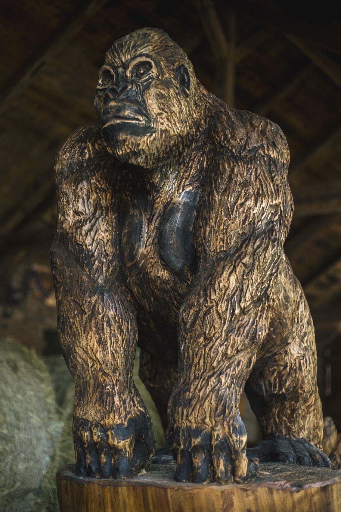 gorila_3